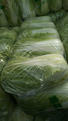 湖北省天门市天门市黄心大白菜 3~6斤 净菜