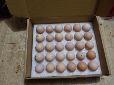 贵州省黔东南苗族侗族自治州凯里市土鸡蛋 食用 箱装
