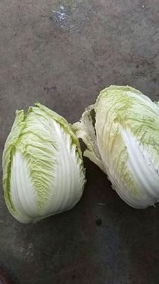 山东省青岛市平度市黄心大白菜 3~6斤 净菜
