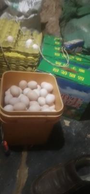 河北省保定市唐县柴鸡蛋 食用 礼盒装
