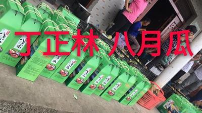湖北省荆门市钟祥市天紫二号八月瓜 60-70g 种植