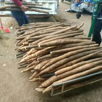 这是一张关于白皮淮山 通货 的产品图片