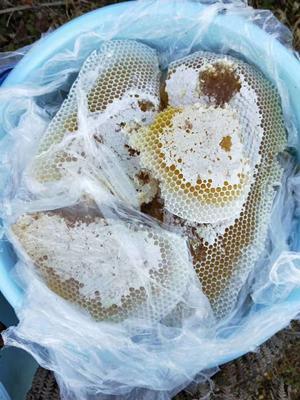 云南省临沧市永德县土蜂蜜 塑料瓶装 2年 100%