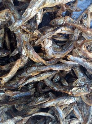 这是一张关于饲料鱼 的产品图片