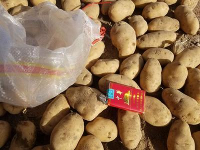 内蒙古自治区乌兰察布市察哈尔右翼后旗荷兰15克新 2两以上