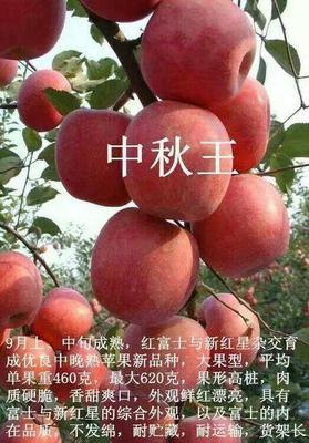 这是一张关于中秋王苹果树苗 1~1.5米 的产品图片