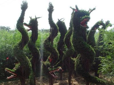 河南省许昌市鄢陵县造型柏树