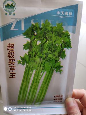 这是一张关于超级实芹王 大田用种 ≥80% 袋装 的产品图片