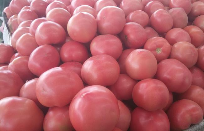 硬粉番茄 通货 弧三以上 硬粉