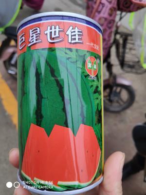 这是一张关于巨星世佳西瓜种 二倍体杂交种 ≥90% 的产品图片