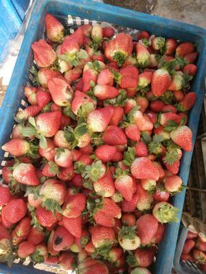 江苏省徐州市贾汪区甜查理草莓 20克以下