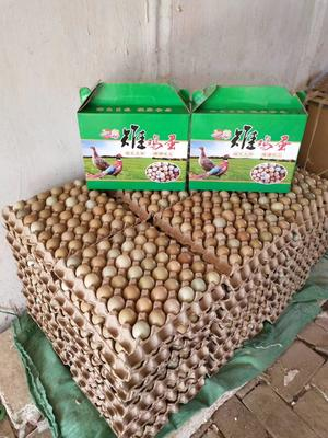 山东省德州市平原县七彩山鸡蛋 食用 简包装