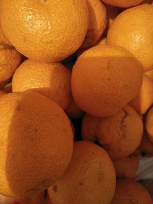 这是一张关于汉源晚熟黄果柑 5 - 5.5cm 2 - 3两 的产品图片