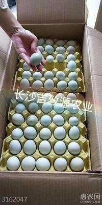 湖南省湘潭市岳塘区土鸡蛋 食用 箱装