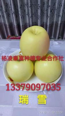 这是一张关于瑞雪苹果苗 1.5~2米 的产品图片