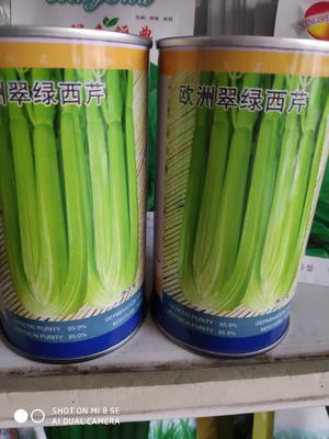 这是一张关于欧州翠绿西芹 大田用种 ≥85% 盒装 的产品图片