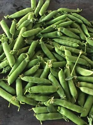 这是一张关于长寿仁豌豆 5-7cm 的产品图片