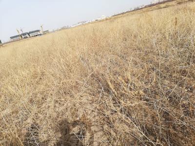 这是一张关于河北杨 的产品图片