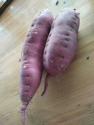 这是一张关于高系14号红薯 3两 红皮 的产品图片