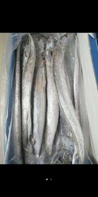 这是一张关于巴基斯坦带鱼 野生 0.5公斤以下 的产品图片