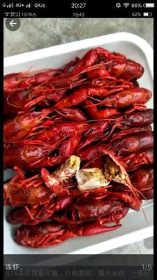这是一张关于潜江小龙虾 7-9钱 稻田虾 的产品图片