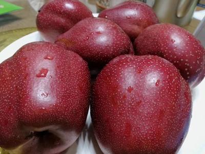 这是一张关于鲁丽苹果苗 1~1.5米 的产品图片
