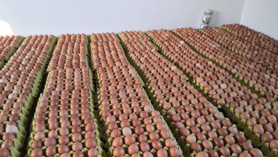 河南省平顶山市汝州市红皮鸡蛋 食用 箱装