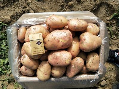 这是一张关于合作88号土豆 3两以上 的产品图片