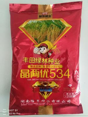 这是一张关于晶两优534 早稻 的产品图片