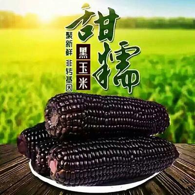 山西省忻州市忻府区黑玉米 去壳 甜糯