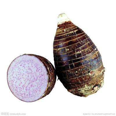 广西壮族自治区桂林市灌阳县槟榔芋 通货