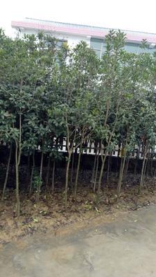 湖南省长沙市长沙县丹桂