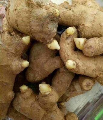 这是一张关于姜种 6两以上 带土 的产品图片