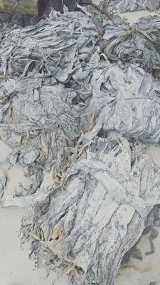 这是一张关于福建海带 的产品图片