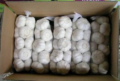 山东省济宁市金乡县白皮大蒜 4.5-5.0cm 多瓣蒜