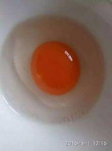 天津滨海新区土鸭蛋 食用 散装