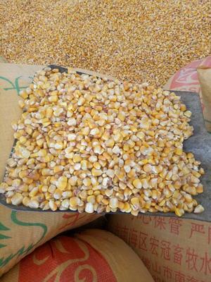 贵州省毕节市威宁彝族回族苗族自治县玉米干粮 杂质很少 水份<14%