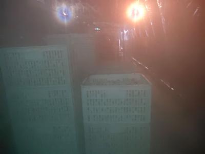 江西省宜春市高安市土鹌鹑蛋 食用 箱装