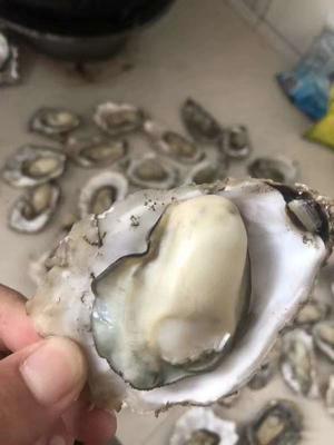 这是一张关于威海牡蛎 人工殖养 5-6两/只 的产品图片