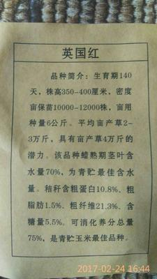 江苏省苏州市吴中区全株玉米青贮