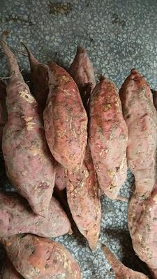 陕西省西安市户县烟薯25 3两以下 红皮
