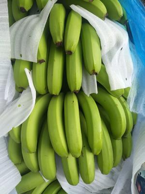这是一张关于西双版纳香蕉 七成熟 的产品图片