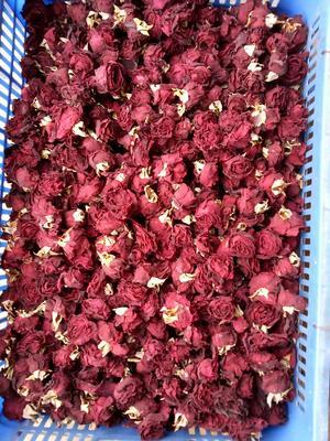 这是一张关于法国墨红玫瑰  2019年新花头水花的产品图片