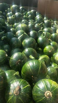 这是一张关于日本南瓜 2~4斤 的产品图片