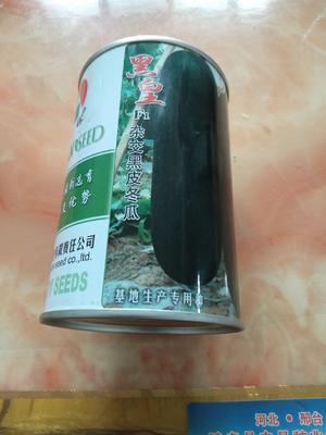 河北省邢台市隆尧县黑皮冬瓜 10~20斤 地冬瓜