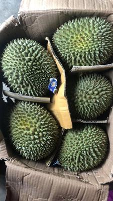 这是一张关于猫山王榴莲 2公斤以下 90%以上 的产品图片