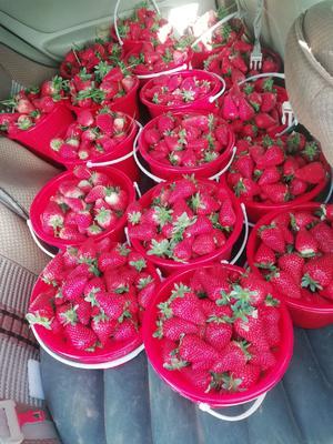 宁夏回族自治区银川市永宁县法兰蒂草莓 20克以上