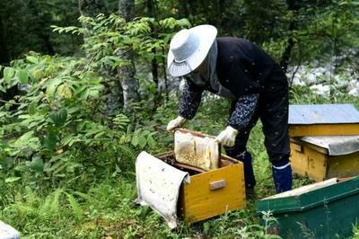 河南省洛阳市伊川县土蜂蜜 塑料瓶装 2年以上 100%
