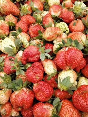 这是一张关于甜查理草莓 20克以下 的产品图片