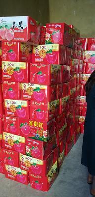 云南省曲靖市罗平县红富士苹果 80mm以上 条红 纸袋